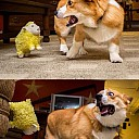 doge much scare wow Paranormal Sheeptivity